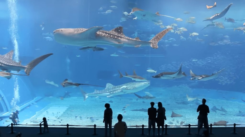 aqauarium-tank-breathtaking